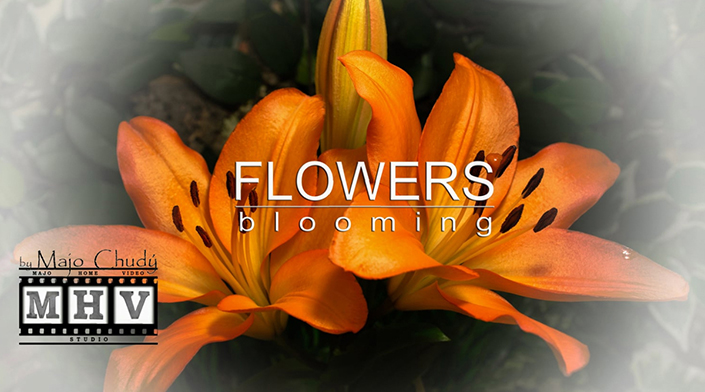 Flowers blooming