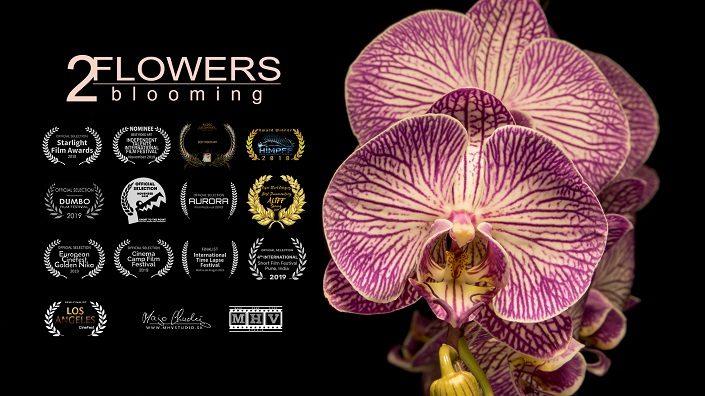 Flowers blooming 2